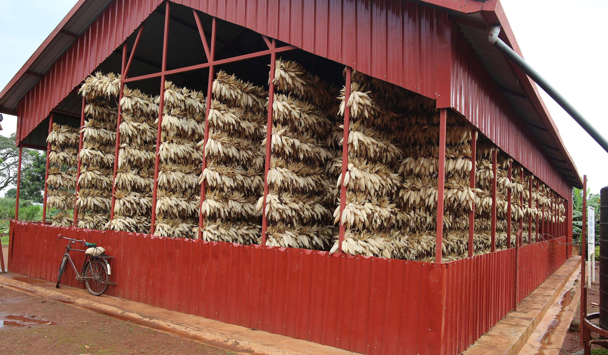Temporary-maize-drier-